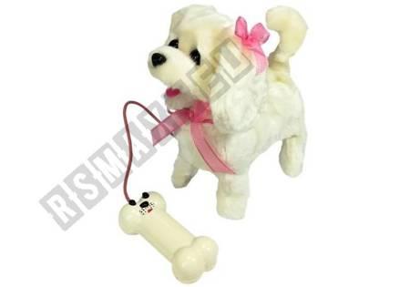 White Dog on a Leash Bone Shaped Pilot Poodle